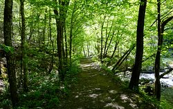 Laurel Creek Trail hiking towards the French Broad River. Big Laurel Creek is on the right.