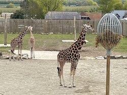 Wingham Zoo - May 2021
