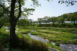 川沿いの桜並木はみどりが豊でした