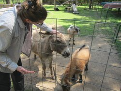 Petting zoo with lots'o friendly animals