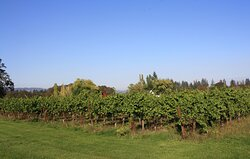 Views from the Front Yard Vineyard.