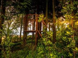 Taken at Cae Hir gardens Lampeter