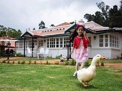 Walk along with ducks