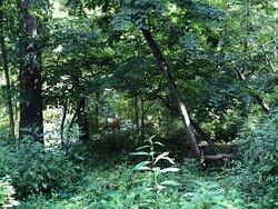 Pleasant stroll through the woods