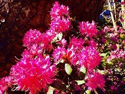 Blossoms invite closer viewing