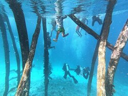 Dive with PapuArts at World's most Biodiverse reefs
