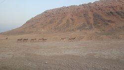 Donkeys spotted along the way
