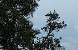 Sungei Buloh Wetland Reserve surrounding - eagle.