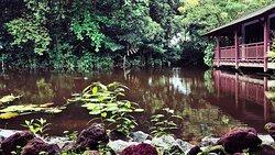 Sungei Buloh Wetland Reserve surrounding- wetland reserve centre.