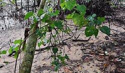 Sungei Buloh Wetland Reserve surrounding- squirrel.