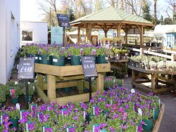 Plant Area at the Woodworks Garden Centre and Café in Mold, North Wales.