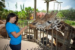 Get up close and personal with animals at Zoo Tampa!
