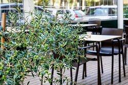 Terraza y olivo