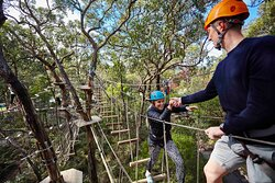 Tree Surfing Australia