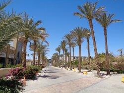 Z hotelu na plażę prowadzi piękna palmowa aleja . Po lewej stronie mieszczą się budynki hotelowo-usługowe i marina a po prawej hotel.