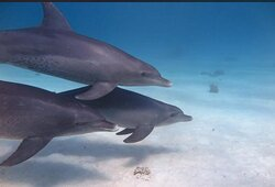 the Dolphins House - Hurghada