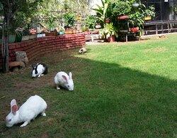Pet rabbits on the garden