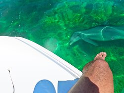 A dolphin swimming below my foot