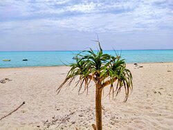 青い海、白い砂浜の与論ブルーのビーチこの三位一体のコントラスト
