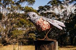 Pink Robin by Tasmanian artist Wendy Edwards