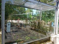 Zoo de Berna