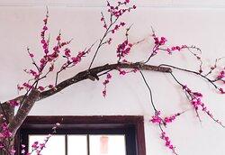 Decoração de flores de cerejeira