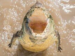 Spectacular Jumping Crocodile Cruise
