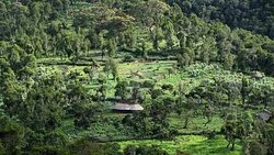 Bale Mountains Adventure Tours, Ethiopia Was Recently Founded By knowledge And experience Team's Service Private Operators, Ibrahim Ahmed An