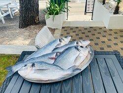 Frish fish and Adriatic scampi 🌊👌🏻