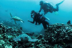 Amanpulo, Diving