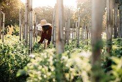 Amanpulo, Organic Farm