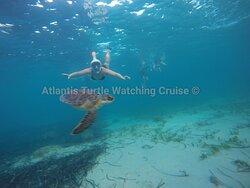 Atlantis Turtle Watching Cruise