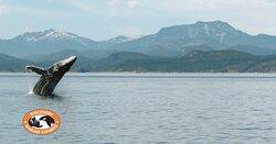 Discovery Marine Safaris Ltd.