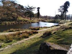 Home Of England's 9 Day Tudor Queen! Bradgate Park.