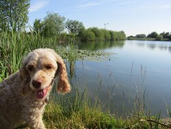 Georges Fishing lake contains Carp to 30lb.  There is ramped access and a disabled accessible fishing platform. Dogs can be walked here but must be kept on a lead.