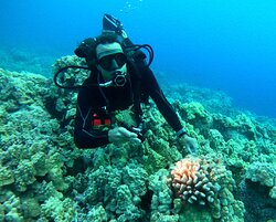 Dane Knezek - pointing out a healthy coral