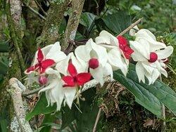 Una magnífica exposición de las orquídeas, helechos plantas y árboles de esta bella región de Mexico