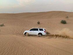 beast in the desert