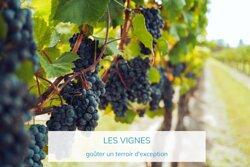 Escapade dans les vignes de Saint Tropez