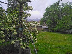 View of the gardens with western hindukush backdrop from under the vine shelter next to snowball tree.
