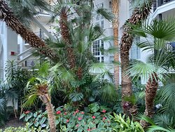 Lush plantings in all areas of the resort