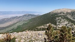 The top of the tree line looking at Bald Mountain