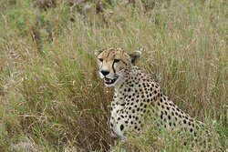 the main goal of the guide is to show nature from its best side and as many of its manifestations as possible.  Serengeti. Central part.