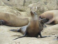 This Seal has an attitude