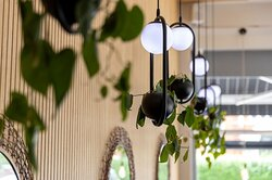 Hanging plants on feature wall