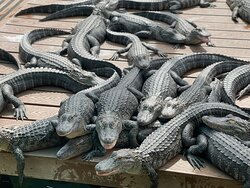 Fun at Gatorland!  Lots to do and family friendly!