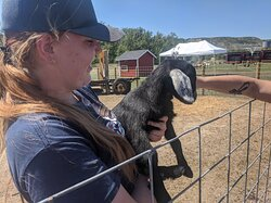 We have some new family members that recently came into the world! Baby Goats!