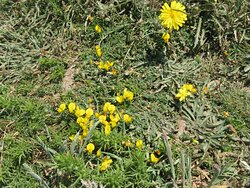 Wild flowers beside the path.