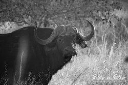 Ruaha National Park Daga boy