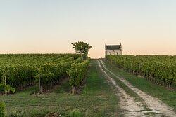 Le vignoble et sa chapelle